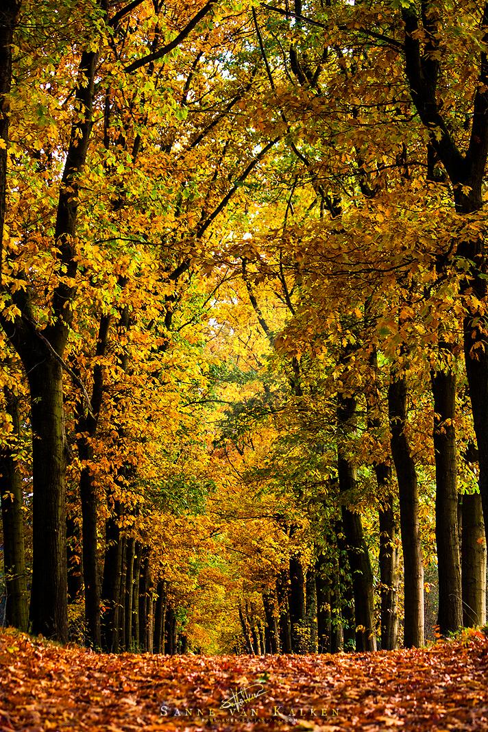 Trees of Gold by Esveeka