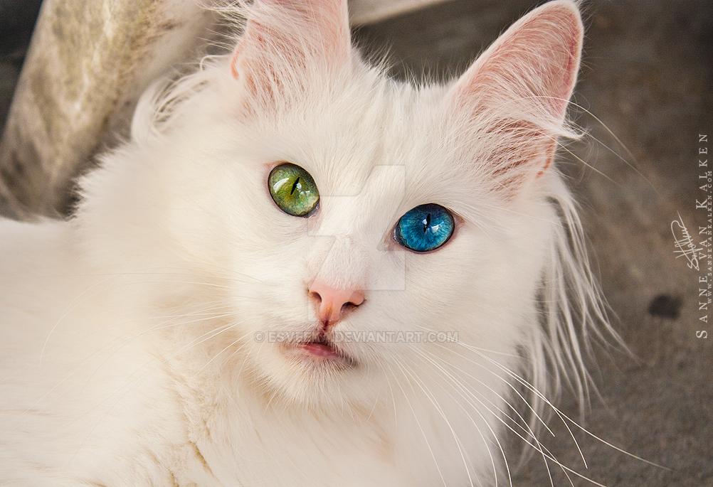 Dem eyes. by Esveeka
