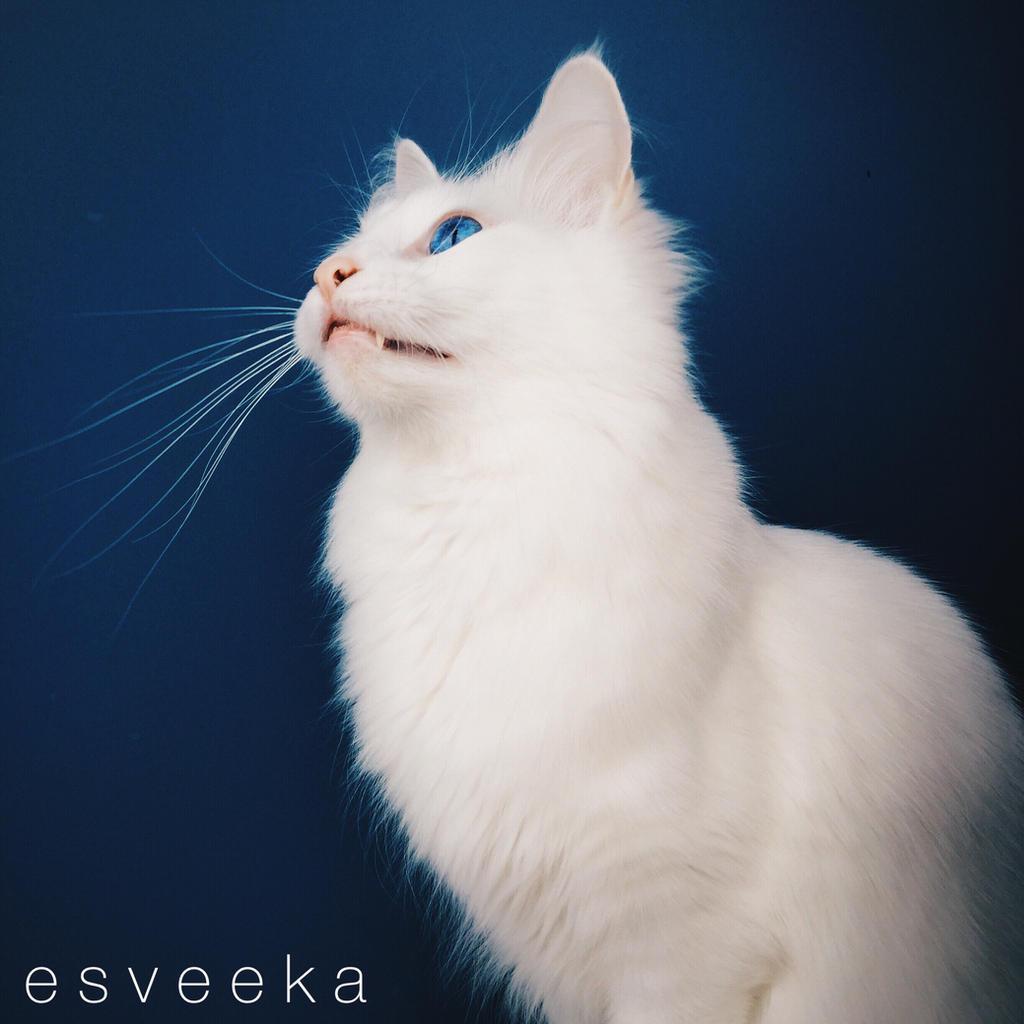 Image by Esveeka