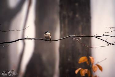 silence @ acasa by Pod-Photography