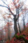 moment of autumn
