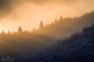 among gentle rays by Pod-Photography