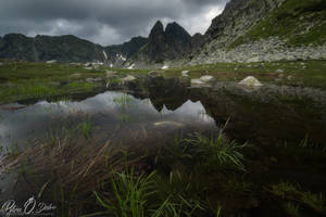 Reflection on the pond by Pod-Photography