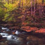 Autumn painting I @ acasa