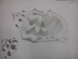 Seashells... :D by DNAiel333