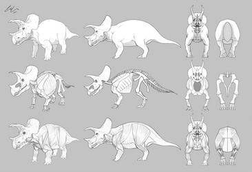 Triceratops prorsus Turnaround by Triceratopsian