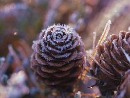 Frozen Pine Cones by Elremerle