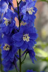 Blue paper flowers by Saoirse-meansfreedom
