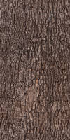 Tree bark - texture, pattern