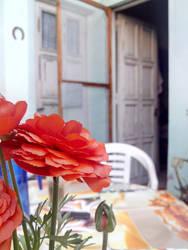 Flor de Lanus