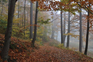 Foggy day by Dariaocean