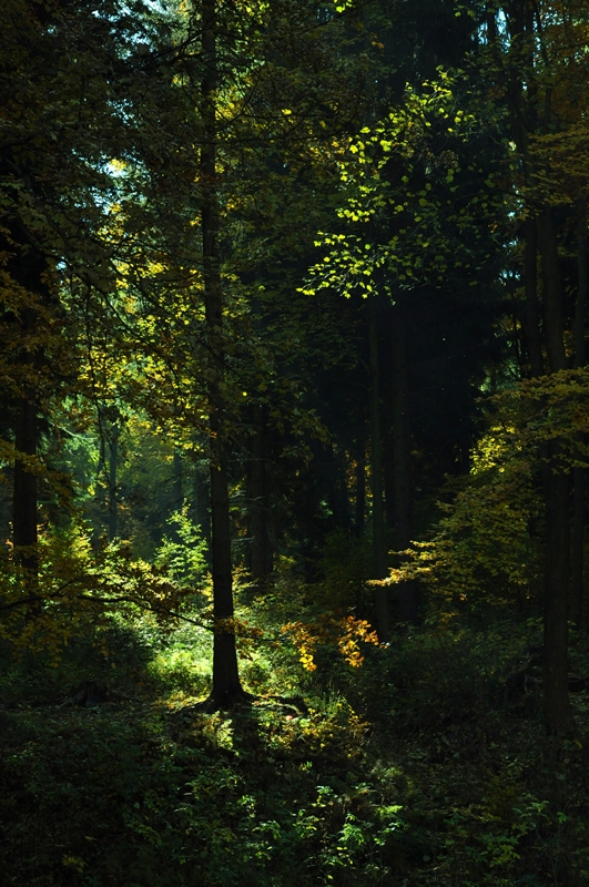 In the light of the forest by Dariaocean