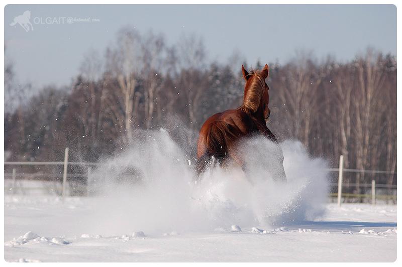 snow bang :D by Olga5