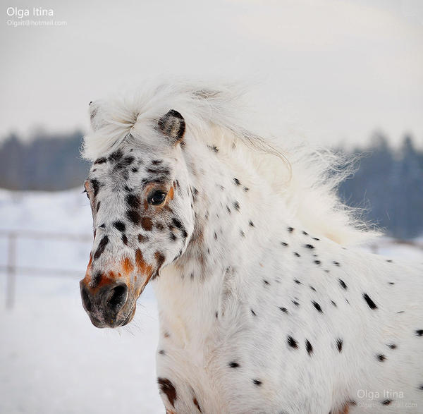 Alladin by Olga5