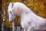 'clear' horse