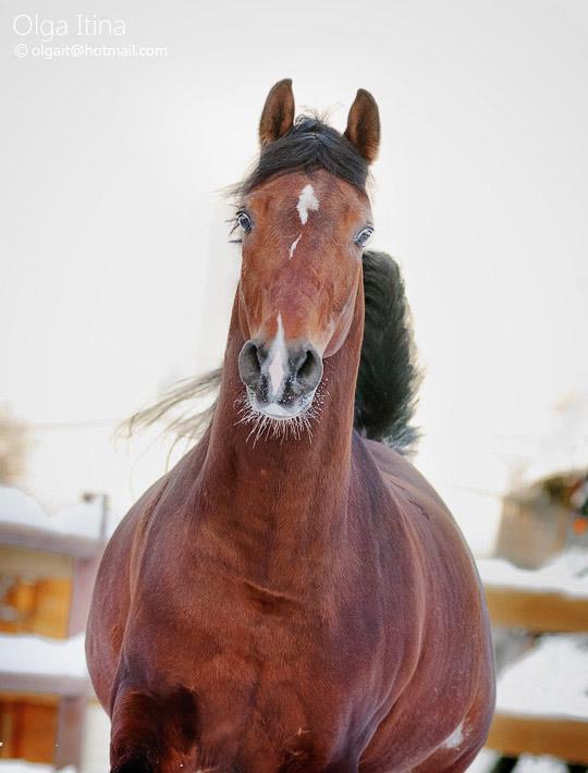 Emir by Olga5