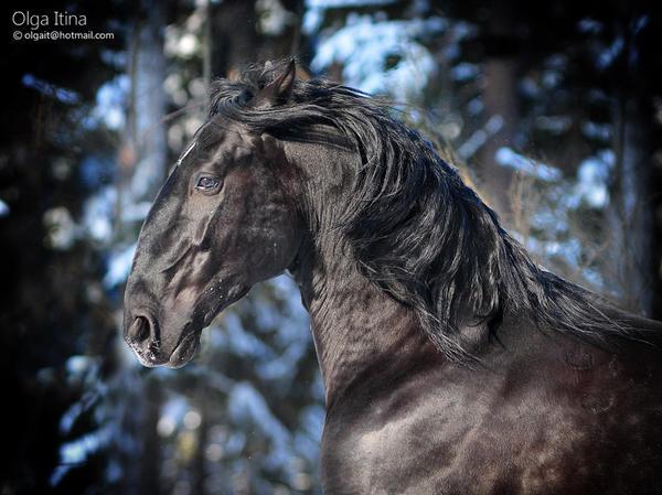 Gothic stallion by Olga5