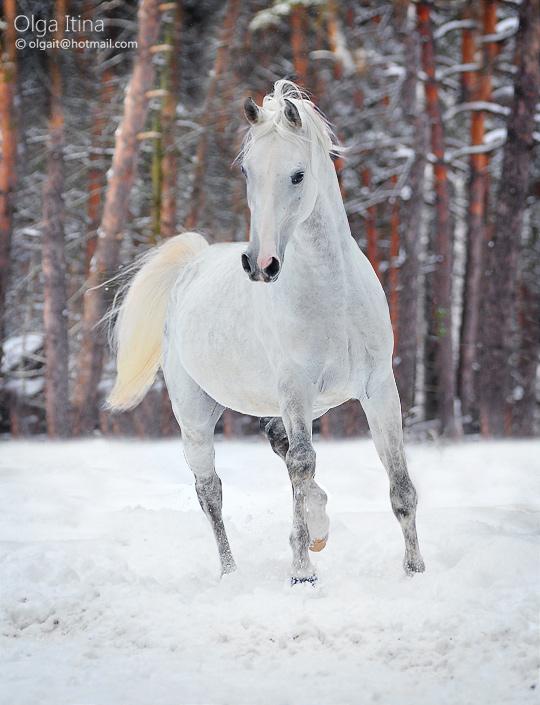 winter beauty by Olga5