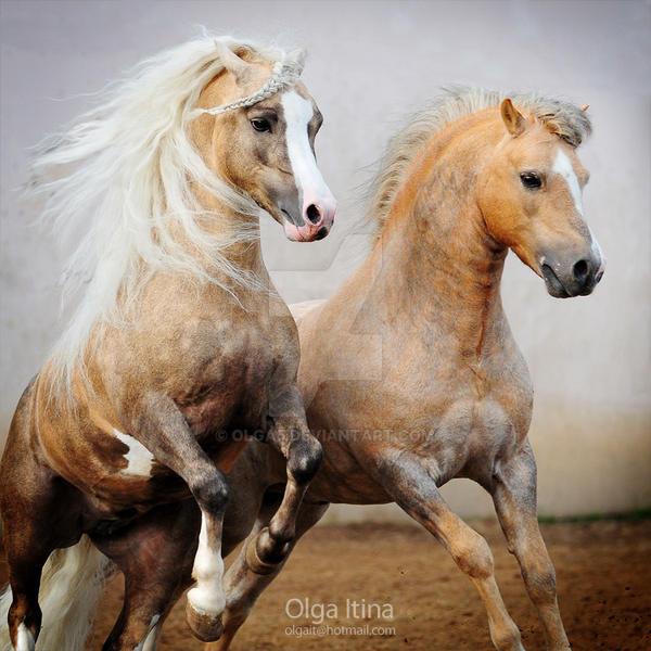 stallions by Olga5