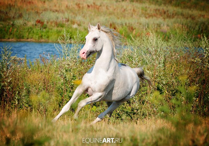 Arabian beauty by Olga5