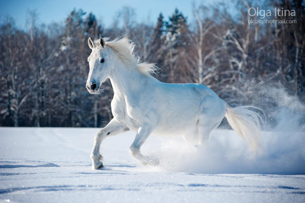 winter fairytale :) by Olga5