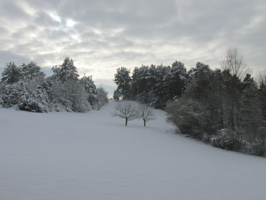 Black Forest in White by JCFox