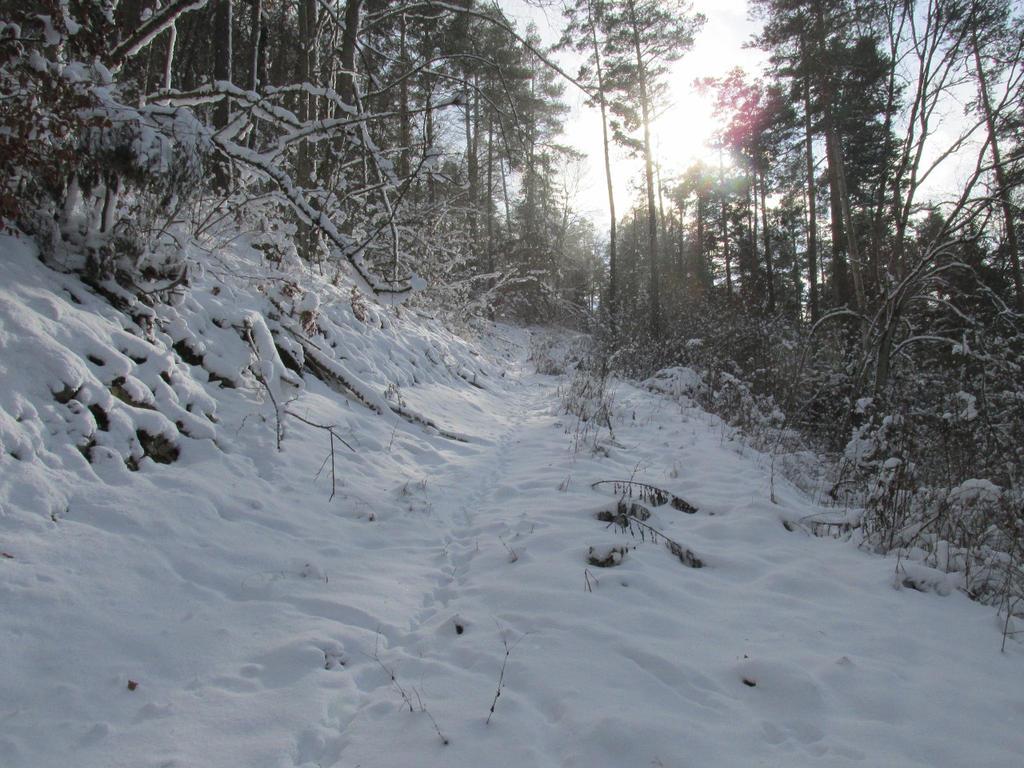 Follow the path :-) by JCFox