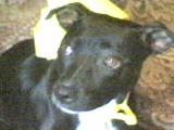 My aunts dog Luna by animal-lover-247