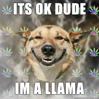 Llama Stoner Dog by xManipulationOfColdx