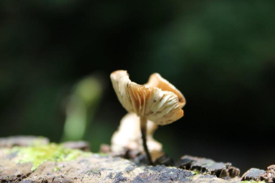 Tiny tiny mushroom. by TheEmpireofLove