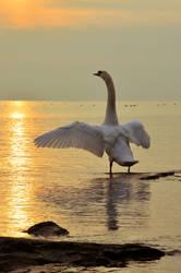 lb-175 swan