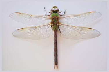 lb1-195 Dragonfly