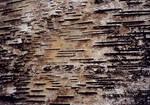 lb1-11 wood texture