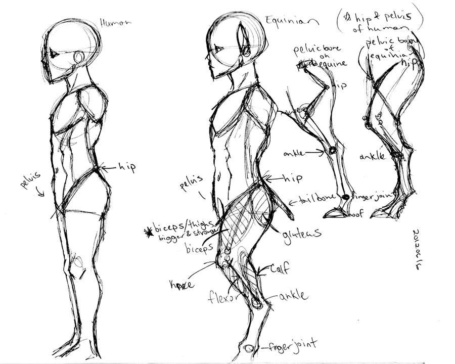 Horse-man Study 1 by SinjaAussiaAngels