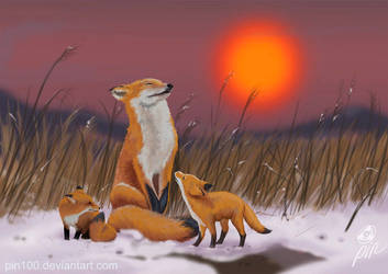 Foxes by pin100