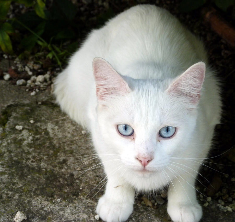 Polydactyl Cat Names Female