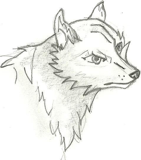 how to draw a cute cartoon wolf