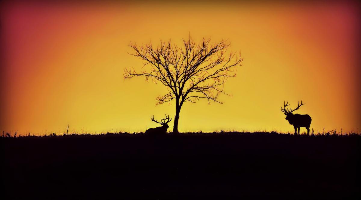 silhouettes by FriesianFury