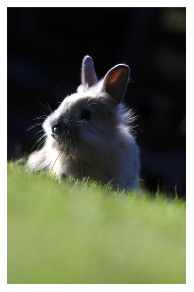 Bunny by naive242