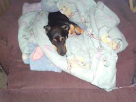 My Dog Penny by joshiepopop