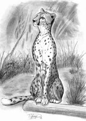 A Cheetah Drawing by D-WRECK