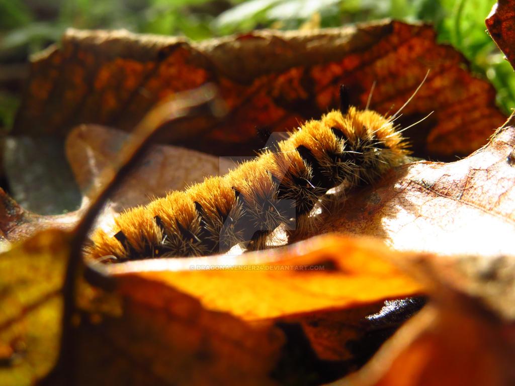 Caterpillar On A Leaf by DragonAvenger24