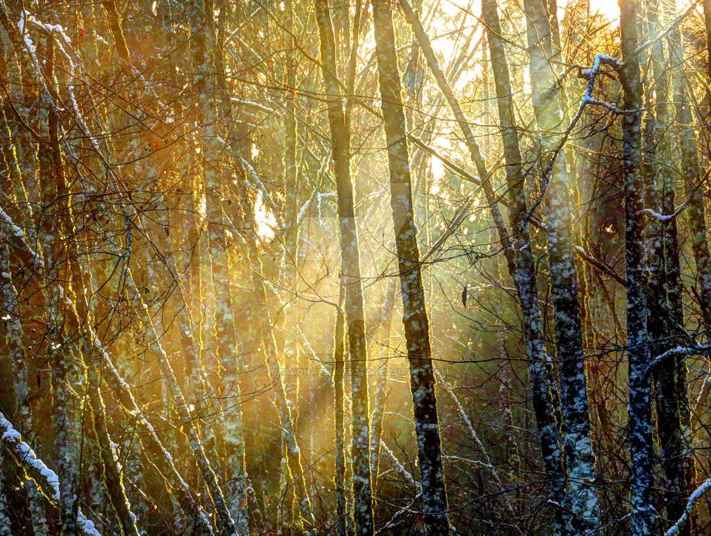 Winter Forest Light by DragonAvenger24