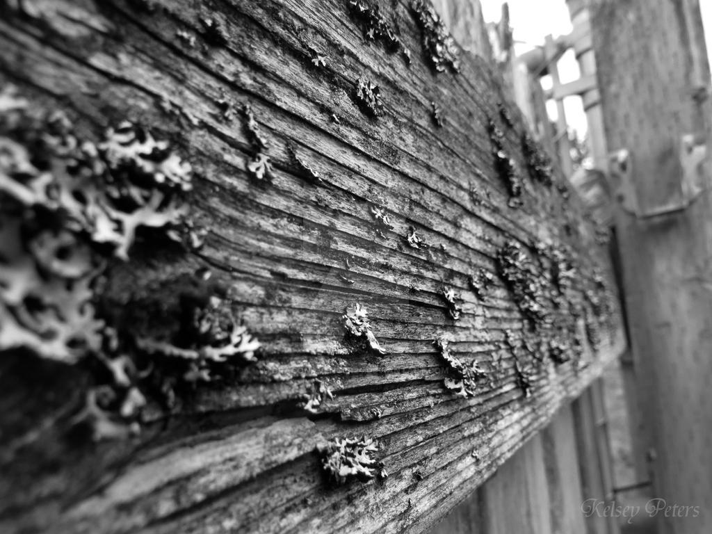 Old Fence by DragonAvenger24