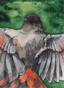 ACEO: Siberian Jay by Tuonenkalla
