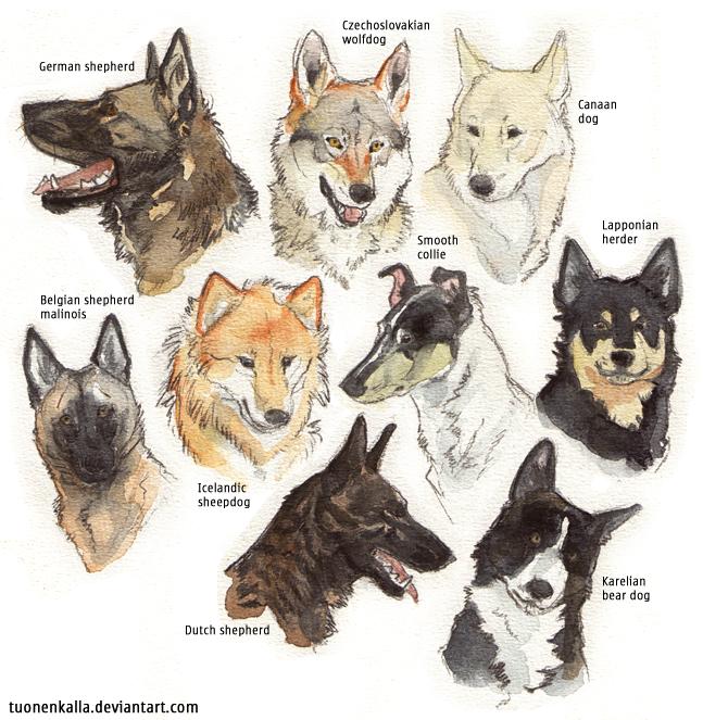 Mafia Dog Breed