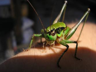 grasshopper by danielnikolic
