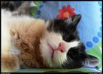 Fluffy sleeping