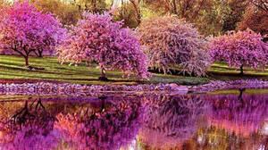 Spring blossom V2