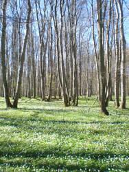 Woodruff beech forest: Habitat overview II
